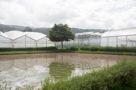 """La """"mana"""", un nacedero de agua que sirve como sistema de riego para los cultivos de flores, tomates, maíz y hortalizas de la zona."""