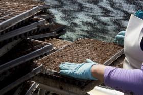Cultivo de plantulas en Semillero del Centro de Bio-Sistemas.
