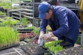 Recepción de plantulas en el semillero del Centro de Bio-Sistemas Alberto Lozano Simonelli.